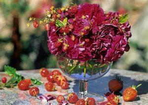Erdbeer-Yoghurt-Tiramisu